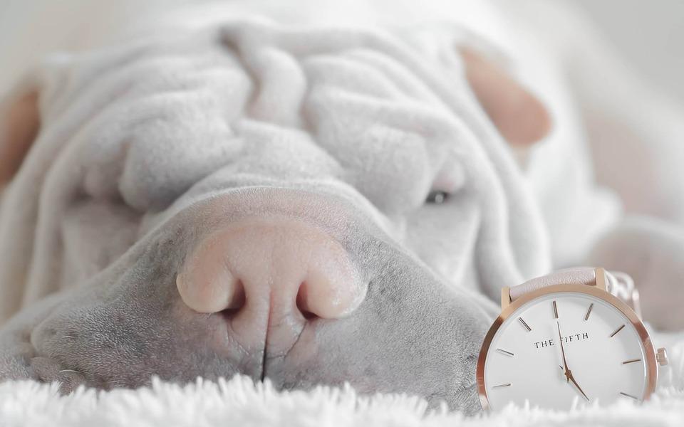 Czy pies powinien spać w łóżku?