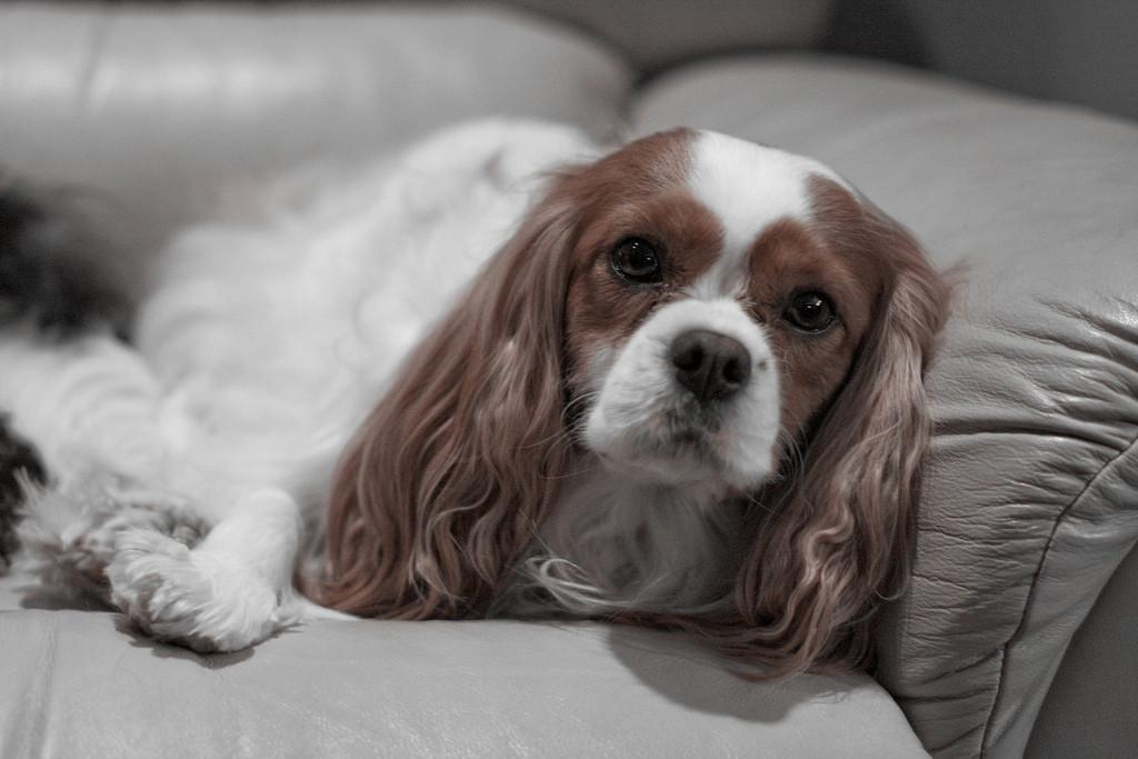 Puppy (fot. CRYSTAL ROLFE  Flickr)