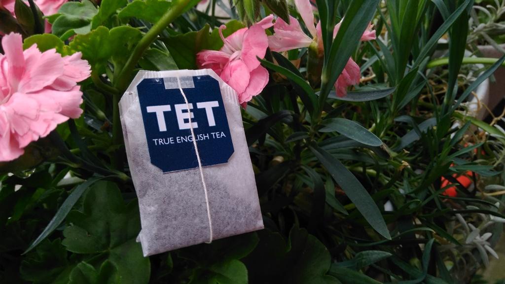 Podlewanie kwiatów herbatą czy nawóz herbaciany